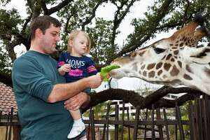 Visitors can feed a giraffe at the zoo.