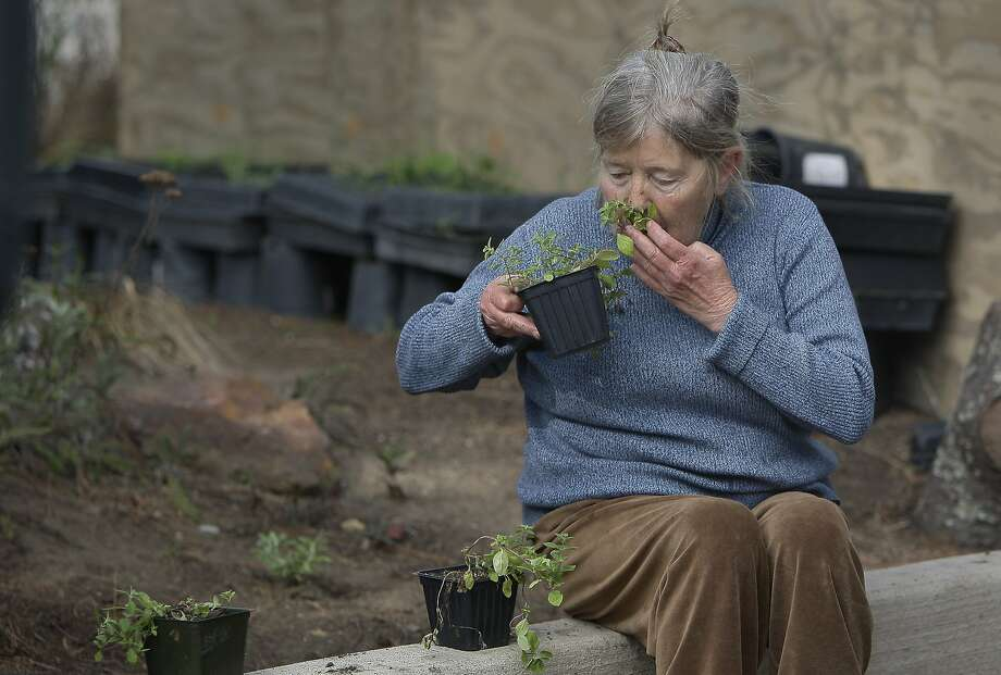 Sharon Kulz smells a selection of plants at Golden Gate Park Community Gardens in San Francisco. Photo: Jessica Christian, The Chronicle