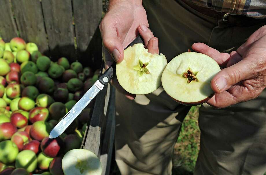 Peter Ten Eyck, owner of Indian Ladder Farms, holds a cut apple to show how fast it starts to turn brown in his apple orchard at Indian Ladder Farms on Friday, Sept. 5, 2014 in Altamont, N.Y. GMO trial testing is being proposed in the United States to grow slow-browning apples. (Lori Van Buren / Times Union) Photo: Lori Van Buren / 00028459A