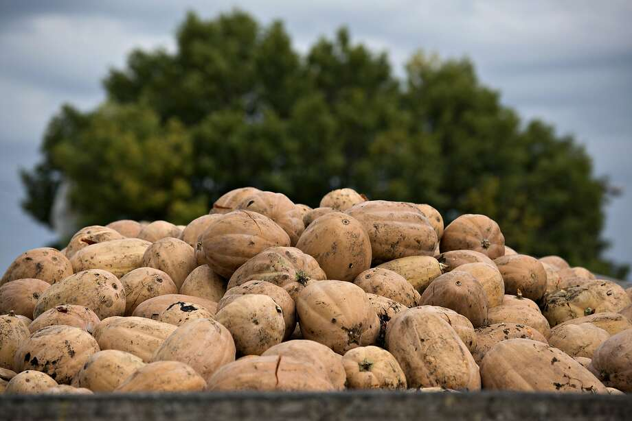 Real pumpkin is a super food, but pumpkin-flavored goods may not be. Photo: Daniel Acker, Bloomberg