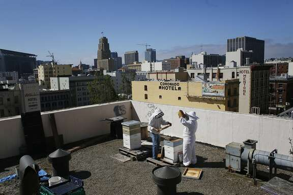 Working high above the streets in the Tenderloin, resident beekeeper with Graze the Roof Paul Koski  and Konrad Bouffard, founder of Round Rock Honey, pull frames saturated with honey during the annual Graze the Roof honey harvest and workshop at Glide Memorial Church in San Francisco, Calif.