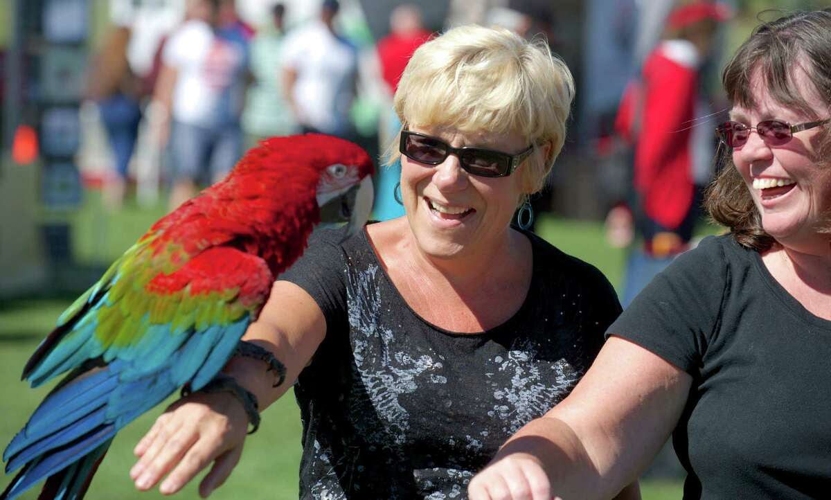 Heiu Morgan, 58, and Mary Clark, 52, both from Newtown, try to pass Monte, a red parrot, to each other during the Newtown Arts Festival 2014, held at the Fairfield Hill Campus, in Newtown, Conn, on Sunday, September 14, 2014. Monte was at the festival with his owner.