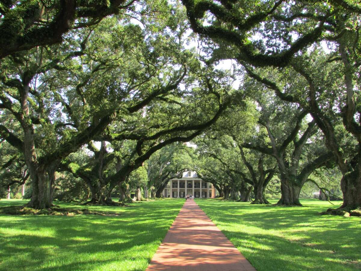 Oak Alley Plantation is framed with an alley of oak trees.