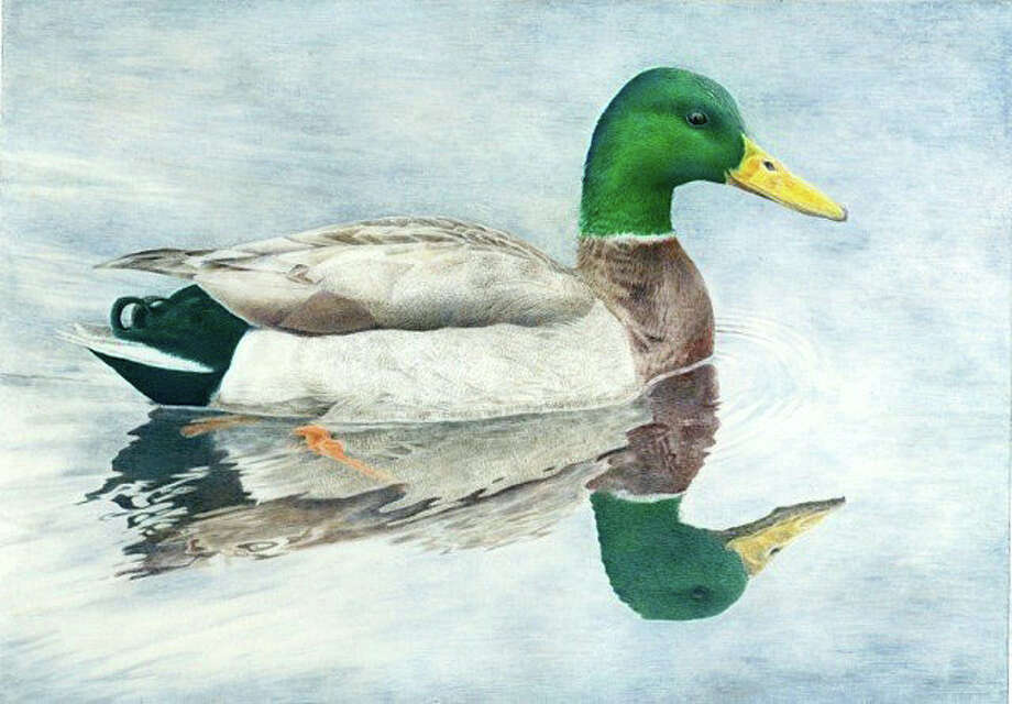 """A watercolor of a duck by Kelly Leahy Radding will be one of the art works on display at Connecticut Audubon's """"Birds and Their Habitat"""" exhibit. Photo: Contributed Photo / Fairfield Citizen"""