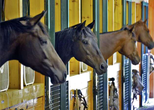 Retired thoroughbred race horses in their stalls at Peter and Suzann Bobley's stable for retired thoroughbred race horses, 18 Karat Farm, Thursday Sept. 11, 2014, in Schuylerville, NY.  (John Carl D'Annibale / Times Union) Photo: John Carl D'Annibale / 00028571A