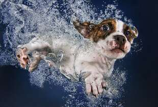 "Popsicle, from photographer  Seth Casteel's  ""Underwater Puppies"" book, a follow-up to ""Underwater Dogs."""
