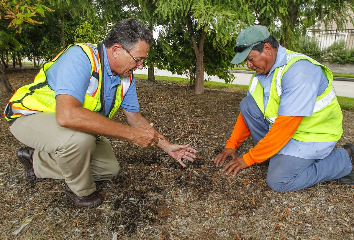Robert Rayburn, landscape architect for the Energy Corridor District, examines a layer of natural mulch and the underlying soil with crew member Wilfredo Hernandez on one of the many medians he is responsible for along the Interstate 10 corridor in west Houston.