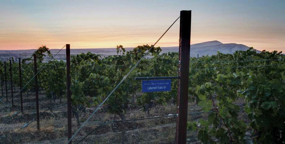 A parcel of Cabernet Franc at Cadence's Cara Mia Vineyard, planted on Red Mountain in central Washington, an area gaining both attention and prestige. Photo: Benjamin Smith / Cadence Winery / ONLINE_YES