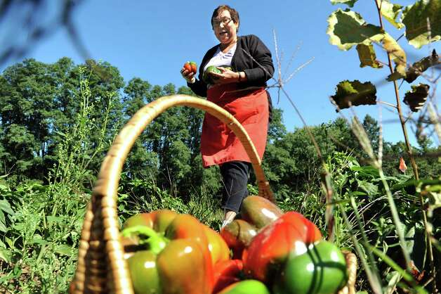 Maria Guadalupe of Troy walks a field of red peppers selecting the best ones on Wednesday, Sept. 17, 2014, at Hillard's Greenhouse in Latham, N.Y. (Cindy Schultz / Times Union) Photo: Cindy Schultz / 10028651A