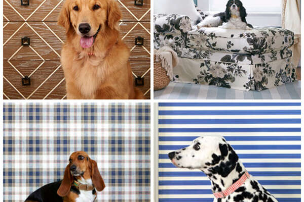 Fetching Style, Four Ways  Here, we present four pet-friendly, pup-inspired spaces that will make you want to sit  and  stay.    Adopt a Dog!  We're shedding light on the four million dogs nationwide-purebreds  and  mixed breeds-who need a second chance. Find one near you at   aspca.com/adopt .       50 Best Ways To Use Mason Jars   The 22 Most Incredible Old Houses in Movies   13 Moonshine Recipes You Need To Make Now   The Best Paint Colors Right Now   12 Design Ideas For A Colorful Retro Kitchen