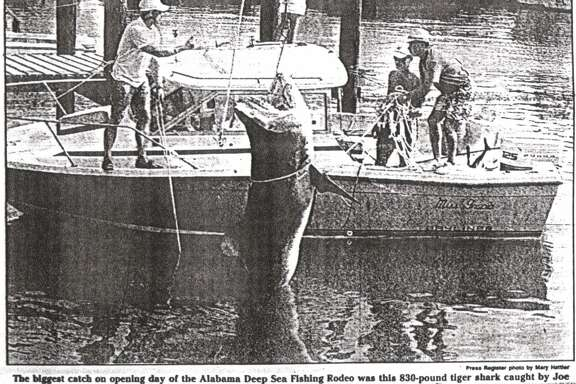 In 1990 the biggest opening day catch was a giant 830 pound tiger shark.