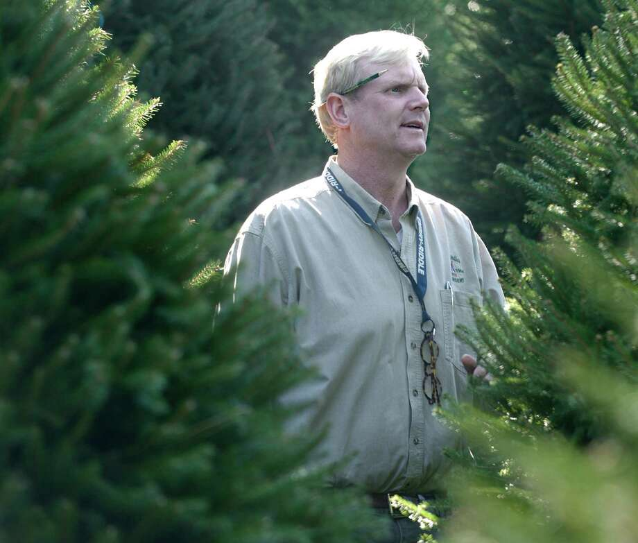 Eugene Reelick, 49, of Bethel, owner of Hollandia Nurseries, in Bethel, Conn, stands among a group of Norway Spruce trees on Hollandia's Old Hawleyville Road property, on Thursday, September 18, 2014. Photo: H John Voorhees III / The News-Times Staff Photographer