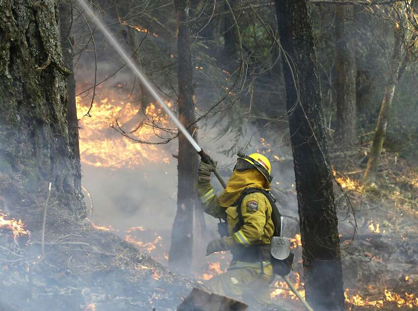 A firefighter waters down a tree as flames approach a containment line, while fighting the King fire near Fresh Pond, Calif., Thursday, Sept. 18, 2014. Authorities arrested Wayne Allen Huntsman, 37, Wednesday and has charged him with deliberately starting the Northern California wildfire that has burned more than 70,000 acres.