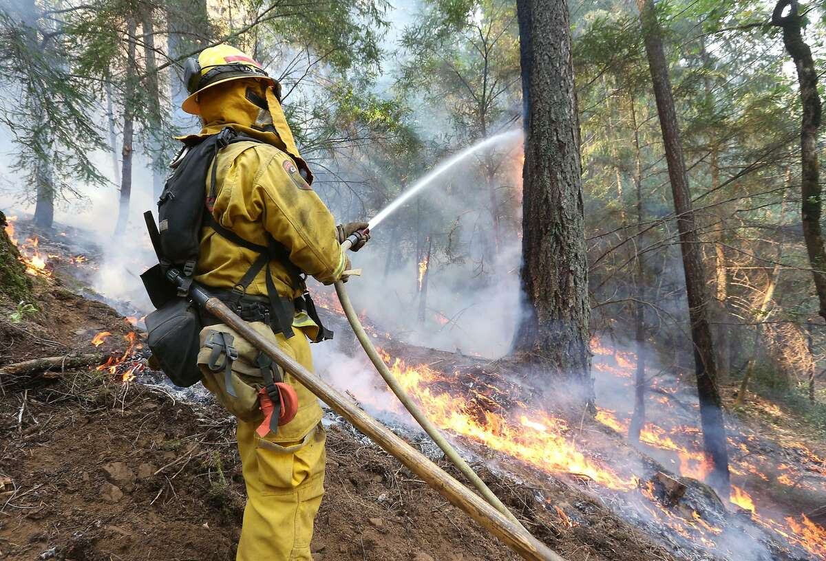 A firefighter puts water on a burning tree as flames approach a containment line, while fighting the King fire near Fresh Pond, Calif., Thursday, Sept. 18, 2014. Authorities arrested Wayne Allen Huntsman, 37, Wednesday and have charged him with deliberately starting the Northern California wildfire that has burned more than 70,000 acres and is only 5 percent contained.(AP Photo/Rich Pedroncelli)