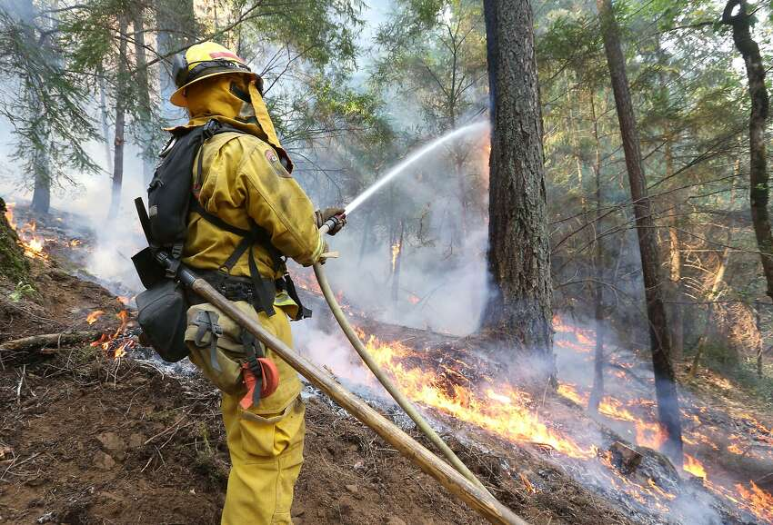 A firefighter puts water on a burning tree as flames approach a containment line, while fighting the King fire near Fresh Pond, Calif., Thursday, Sept. 18, 2014. Authorities arrested Wayne Allen Huntsman, 37, Wednesday and have charged him with deliberately starting the Northern California wildfire that has burned more than 70,000 acres.