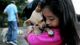 Fernanda Guerrero, 4, with her pet Chihuahua Luna where the SNAP Houston Mobile Clinic is offering free spaying and neutering as part of their Spay-Neuter Assistance Program in the parking lot of the Promise Community Middle School Ripley Campus Thursday, Sept. 18, 2014, in Houston, Texas. The mobile clinic delivers high-quality spay and neuter services for animals in low-income neighborhoods where cost, transportation and the lack of veterinary services are obstacles to obtaining animal healthcare. Eighteen dogs and seven cats were serviced.