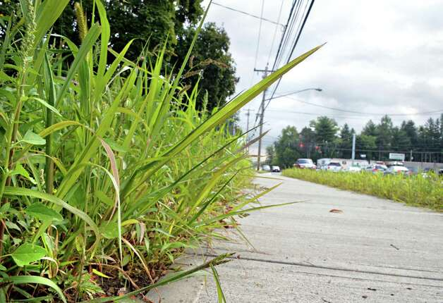 Weeds and unmowed grass along new sidewalks on Western Ave. near Glenwood Street Tuesday Sept. 16, 2014, in Albany, NY.  (John Carl D'Annibale / Times Union) Photo: John Carl D'Annibale / 00028635A