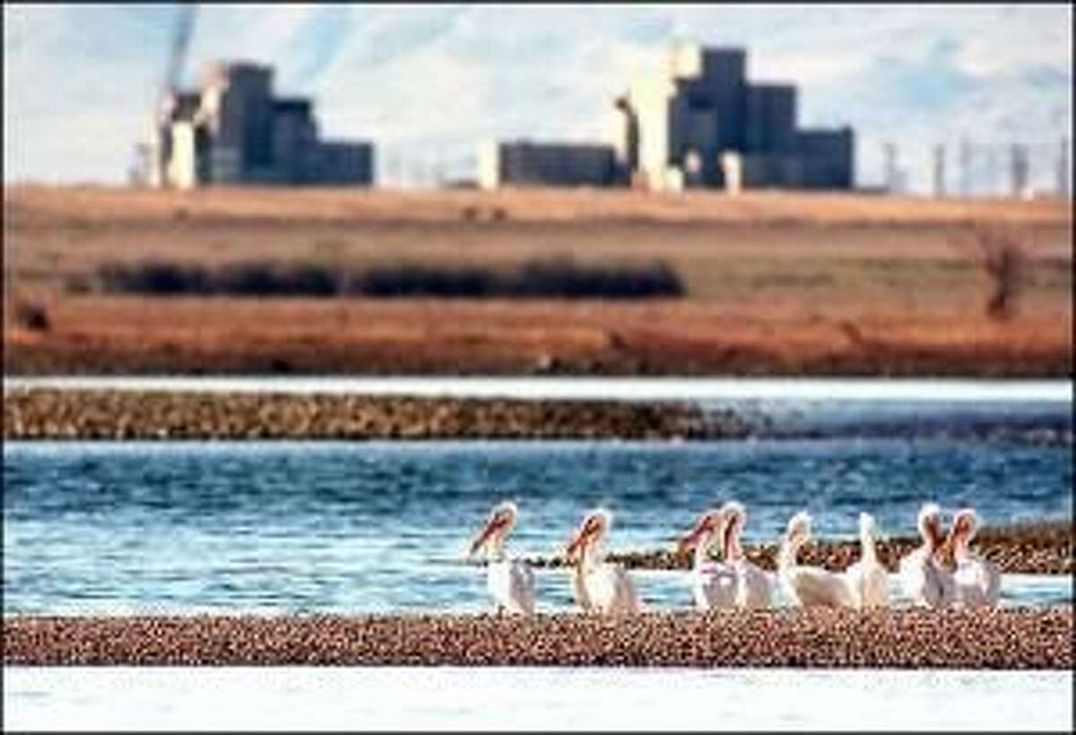 Pelicans on an islet in the Columbia River, part of Hanford Reach National Monument. Old shut-down nuclear reactors in the background.