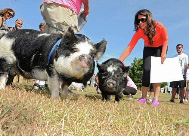Tonya DiDomenico of New York City, right, pets pigs Charlie, left, and Clyde of Halfmoon at The Albany Walk for Farm Animals at The Crossings of Colonie on Sunday, Sept. 21, 2014 in Colonie, N.Y. For more than 25 years, Farm Sanctuary has rescued and provided sanctuary for abused farm animals, educated the public about the routine cruelty they endure on factory farms, and advocated on their behalf. The Walks bring together thousands of people from different backgrounds in cities all across the U.S. and Canada to raise vital funds to support the organizationOs life-saving work and promote kindness towards farm animals. (Lori Van Buren / Times Union) Photo: Lori Van Buren / 00028631A