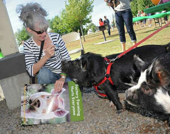Connie Filkins of East Berne takes a photo of pigs Clyde and Charlie, right, of Halfmoon at The Albany Walk for Farm Animals at The Crossings of Colonie on Sunday, Sept. 21, 2014 in Colonie, N.Y. For more than 25 years, Farm Sanctuary has rescued and provided sanctuary for abused farm animals, educated the public about the routine cruelty they endure on factory farms, and advocated on their behalf. The Walks bring together thousands of people from different backgrounds in cities all across the U.S. and Canada to raise vital funds to support the organizationOs life-saving work and promote kindness towards farm animals. (Lori Van Buren / Times Union) Photo: Lori Van Buren / 00028631A