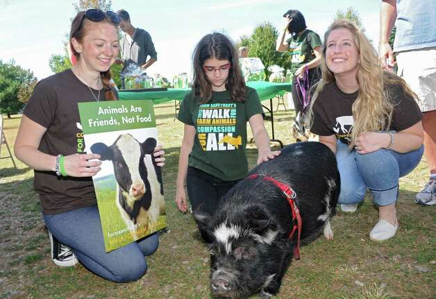 From left, Ashley Snyder of Syracuse, Angelina Berhaupt , 13, and Lexie Monson of Albany get to know Clyde, a pig from Halfmoon at The Albany Walk for Farm Animals at The Crossings of Colonie on Sunday, Sept. 21, 2014 in Colonie, N.Y. For more than 25 years, Farm Sanctuary has rescued and provided sanctuary for abused farm animals, educated the public about the routine cruelty they endure on factory farms, and advocated on their behalf. The Walks bring together thousands of people from different backgrounds in cities all across the U.S. and Canada to raise vital funds to support the organizationOs life-saving work and promote kindness towards farm animals. (Lori Van Buren / Times Union) Photo: Lori Van Buren / 00028631A