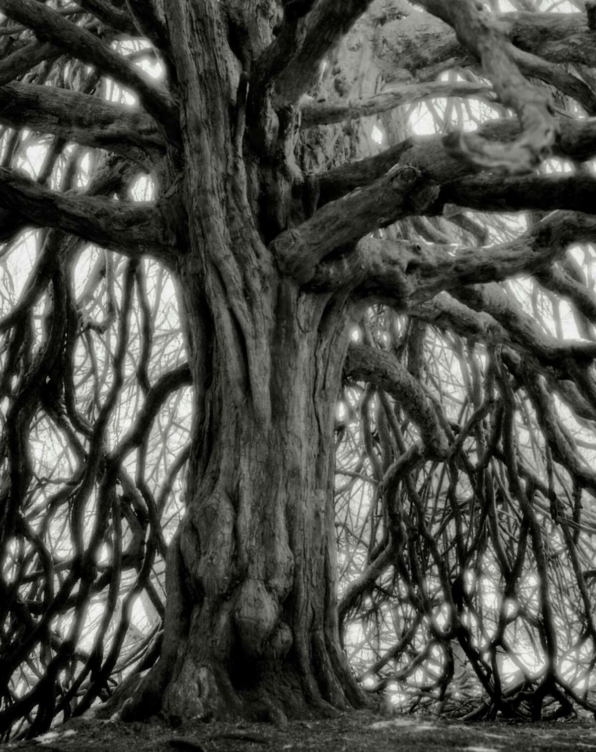 """Beth Moon's """"The Whittinghame Yew"""" (2001) shows a tree in East Lothian, Scotland."""