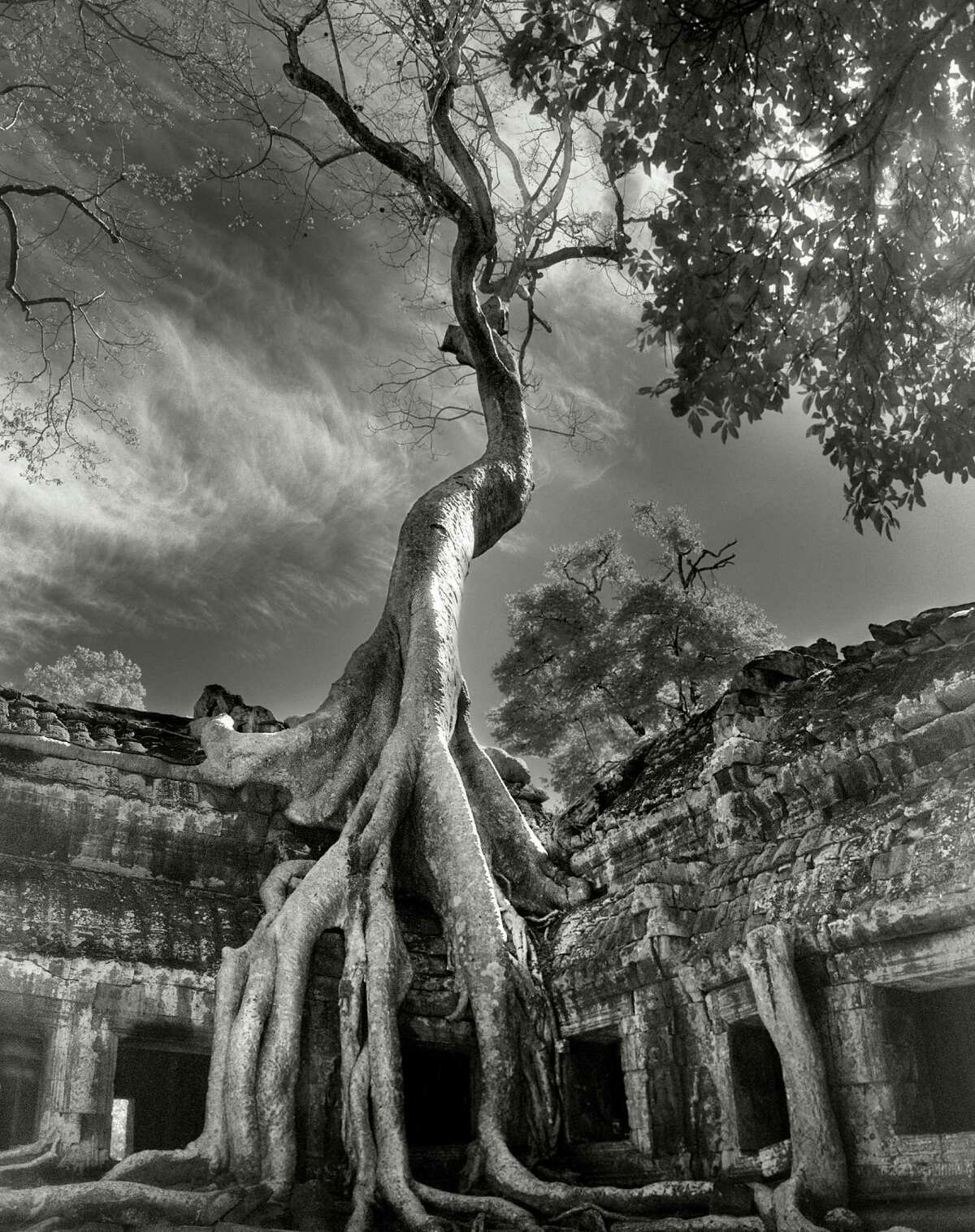 """Above: Beth Moon found """"Rilke's Bayon"""" (2007) in Siem Reap province, Cambodia."""