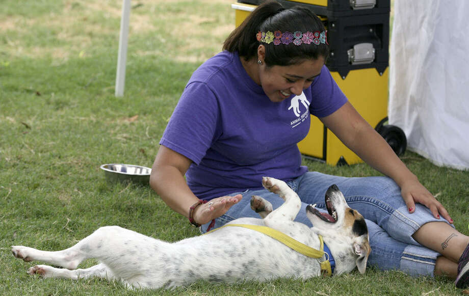 Laura Trejo, an Animal Defense League adoption counselor, plays with Elgin, a 1-year-old terrier mix, who was up for adoption during the San Antonio Urban Pet Market at Travis Park in July. The pet market showcases vendors and pets to adopt; it will be at the Animal Defense League Saturday. Photo: Cynthia Esparza / For The San Antonio Express-News / SAN ANTONIO EXPRESS-NEWS