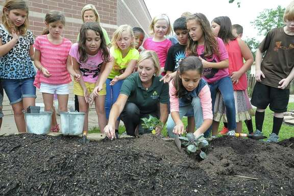 Stephanie Baker, center, leads a group of third-graders in how to plan cauliflower during her gardening class at Sampson Elementary in Cypress.