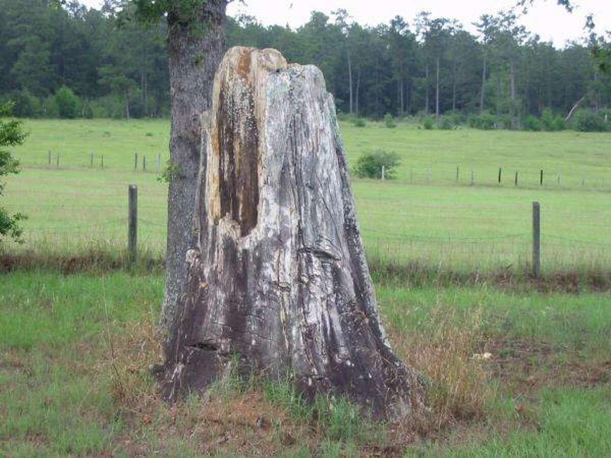 Favorite Southeast Texas Craigslist finds