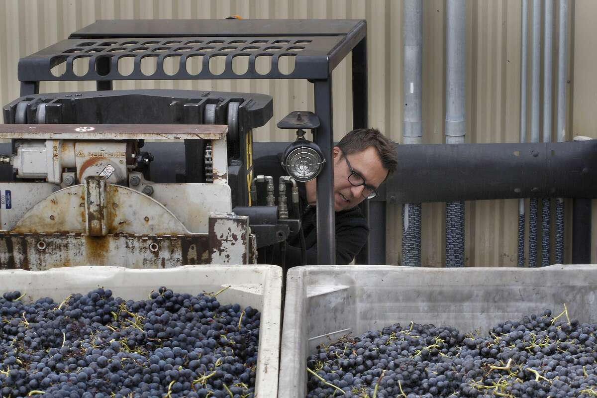 Winemaker Chris Brockway unloads Carignan grapes from his truck at his winery Broc Cellars in Berkeley, Calif., on Friday, September 19, 2014. He picked up the grapes from Green Valley this morning.