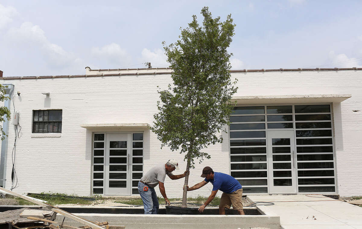 Grant Penix (right), owner of Greenleaf Landscape & Design, and his father, Dave Penix, plant a lacebark elm behind Douglas Architects on Houston Street as part of improvements at the site.
