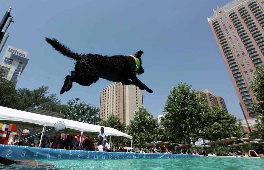 Maxy, above, and Buster, far right, take to the air during a past Dock Dogs competition at Discovery Green. Photo: Mayra Beltran, Staff / © 2012 Houston Chronicle