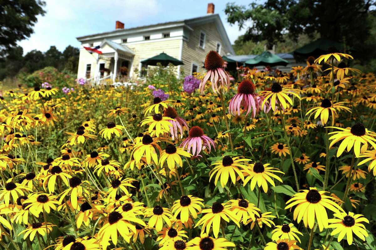 The Bees Knees Cafe on Saturday, Sept. 10, 2014, at Heather Ridge Farm in Preston Hollow, N.Y. (Cindy Schultz / Times Union)