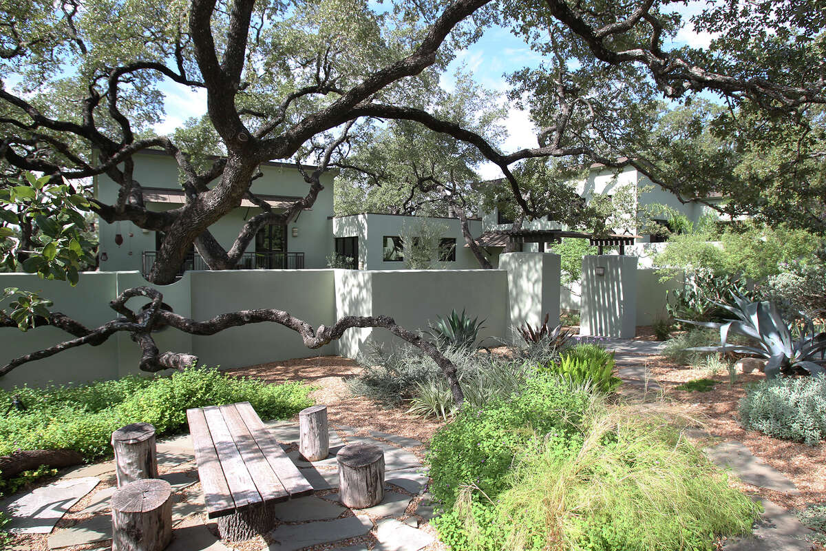 A sprawling live oak is a focal point of a landscape that includes a vast variety of xeric plants and not a bit of lawn. The house in Colonies North is one of six on the 2014 Watersaver Landscape Tour, which will be from 9 a.m. to 3 p.m. Oct. 4.