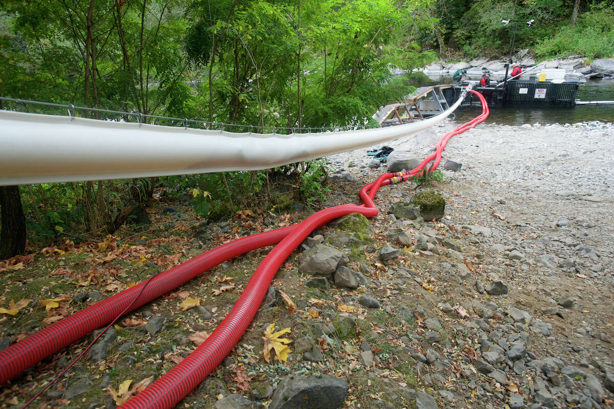 Tubes from a vacuum-powered transport system designed by Whooshh Innovations move salmon on Tuesday, Sept. 23, 2014, to a waiting truck and then to a hatchery on the upper Washougal River.