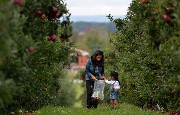 Beth Donahue is assisted by her four-year-old daughter Yohan of Albany while apple picking at Bowman Orchards Thursday afternoon, Sept. 25, 2014, in Rexford, N.Y. (Skip Dickstein/Times Union) Photo: SKIP DICKSTEIN