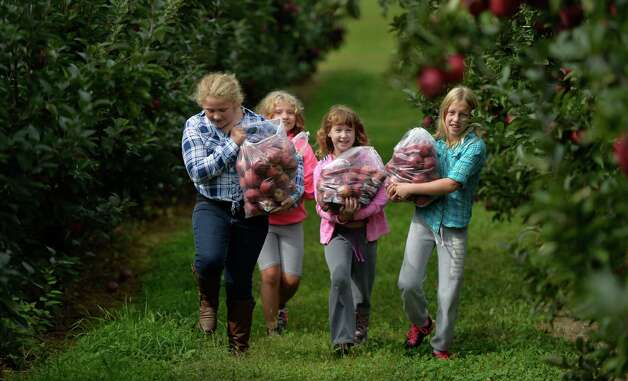 Samantha Hansen, 10, left, Kaitlyn Hansen, 7, Marin Nolan, 8, and Olivia Nolan, 10, right, of Clifton Park carry arm loads full of apples at the Bowman Orchards Thursday afternoon, Sept. 25, 2014, in Rexford, N.Y. (Skip Dickstein/Times Union) Photo: SKIP DICKSTEIN
