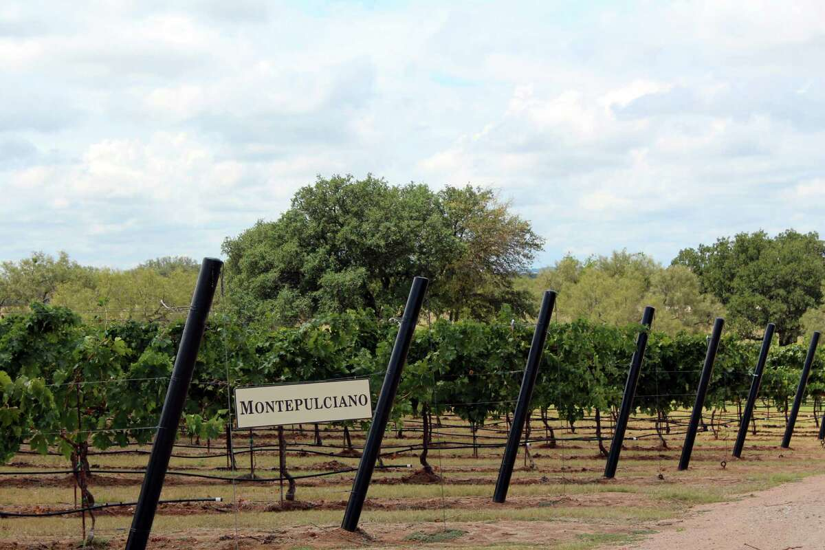 Montepulciano vines are planted at Grape Creek Vineyards, which describes itself as Tuscany in Texas. (Jennifer McInnis / San Antonio Express-News)