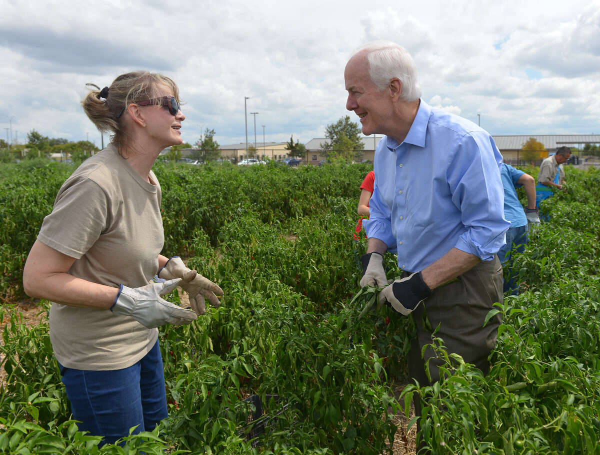 U.S. Sen. John Cornyn talks with Jeanette Rhodes at the San Antonio Food Bank's West Side farm. The field has produced 50,000 pounds of fruits and vegetables for the hungry.