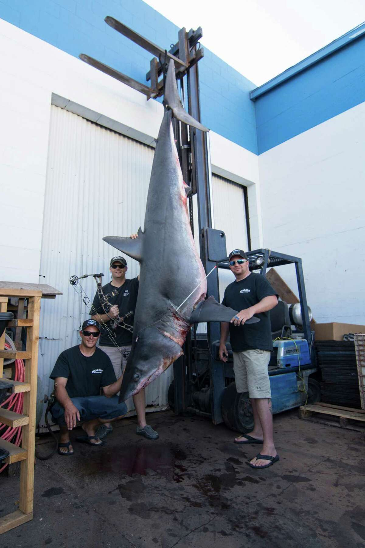 TV host Jeff Thomason, of Weatherford, Texas, landed a world bowfishing record for Mako shark August 12 off the coast of Huntington Beach, California. The shark, which weighed 809.5 pounds and stretched 11 feet, beat the previous world bowfishing record for Mako by about 300 pounds, according to the Bowfishing Association of America.