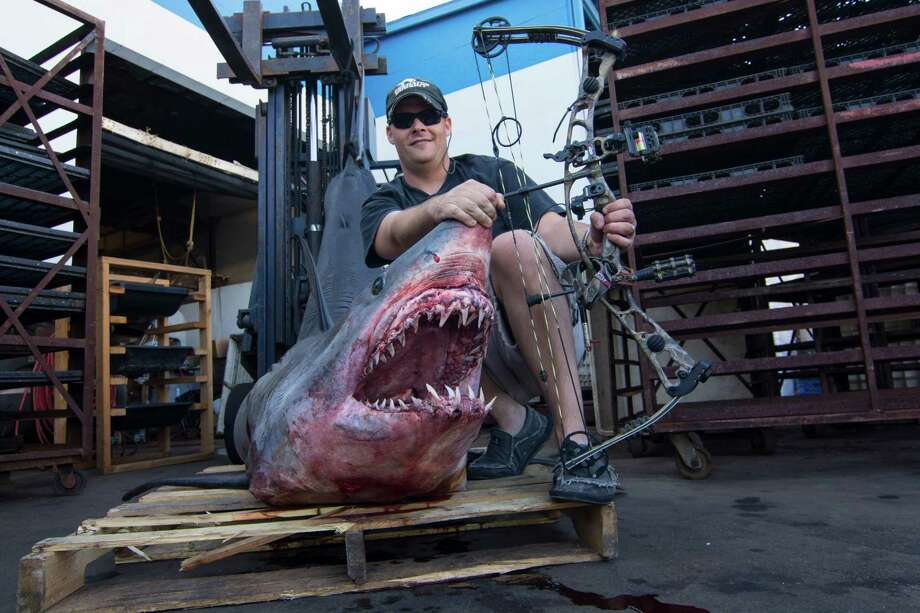 TV host Jeff Thomason, of Weatherford, Texas, landed a world bowfishing record for Mako shark August 12 off the coast of Huntington Beach, California. The shark, which weighed 809.5 pounds and stretched 11 feet, beat the previous world bowfishing record for Mako by about 300 pounds, according to the Bowfishing Association of America. Photo: Courtesy Of Jeff Thomason