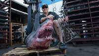 Texas TV host lands world-record Mako shark - Photo