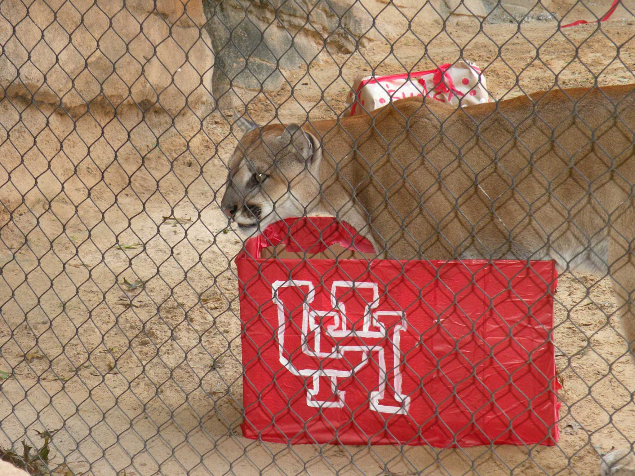 Uh Mascot Shasta Celebrates Wild Birthday At Houston Zoo