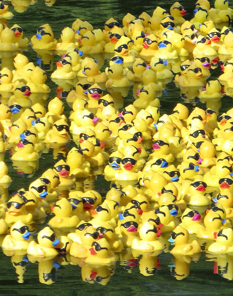 A paddling of ducks will hit the river by the Tobin Center Saturday for the annual Lucky Duck Race. Photo: Express-News File Photo / © 2013 San Antonio Express-News