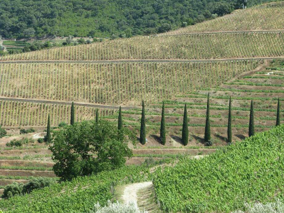 Vertical vineyards at Bom Retiro in Portugal. These mountain-hugging terraced vineyards produce one of the most recognizable wines in the world and the most visible export of this economically struggling country. Photo: Giovanna Dell'Orto, STR / AP
