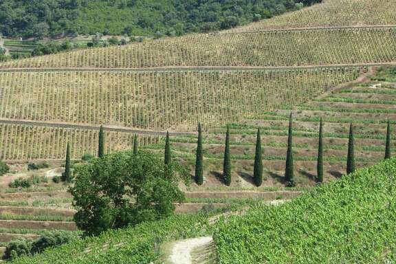 Vertical vineyards at Bom Retiro in Portugal. These mountain-hugging terraced vineyards produce one of the most recognizable wines in the world and the most visible export of this economically struggling country.
