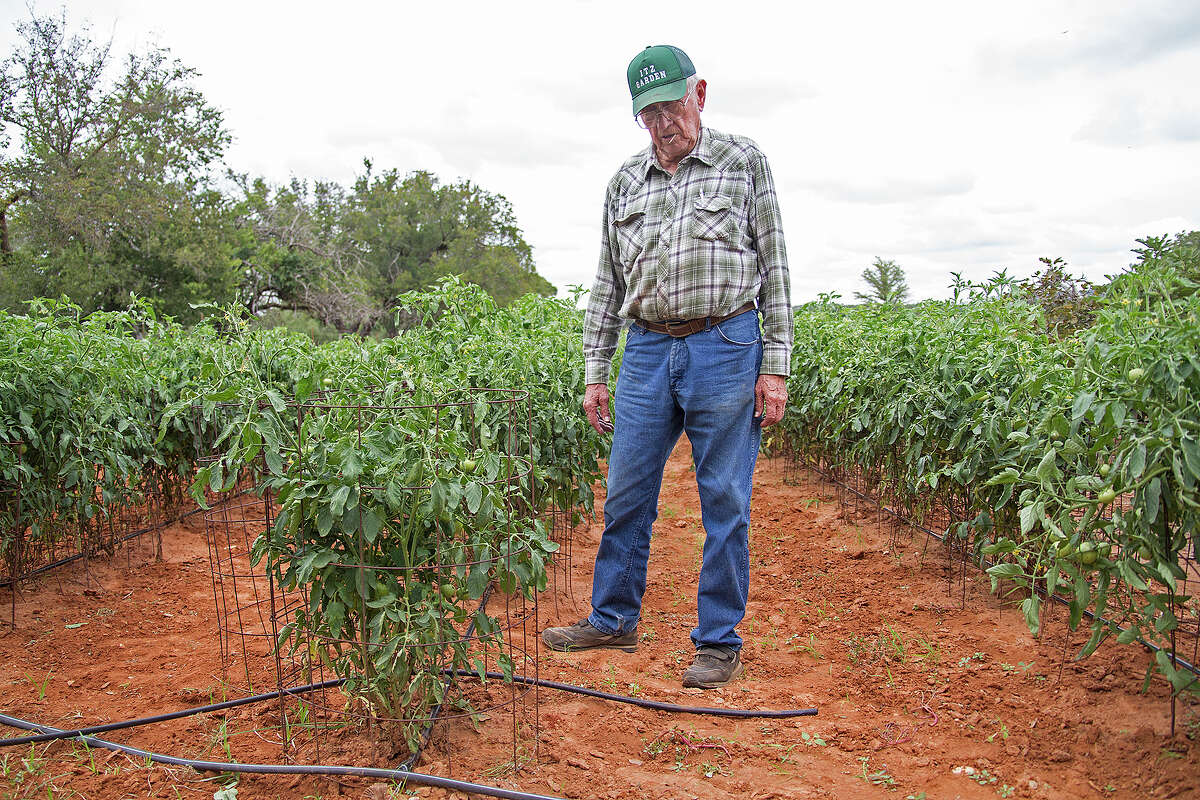 Melvin Itz explains the drip irrigation system that waters tomatoes and other plants at Itz Garden.