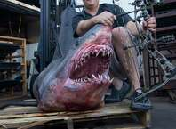 A Texas man reeled in a record-breaking mako shark off of the California coast in August. The shark — weighed at 809.5 pounds — was 300 pounds heavier than the previous world bowfishing record for snagging mako sharks.
