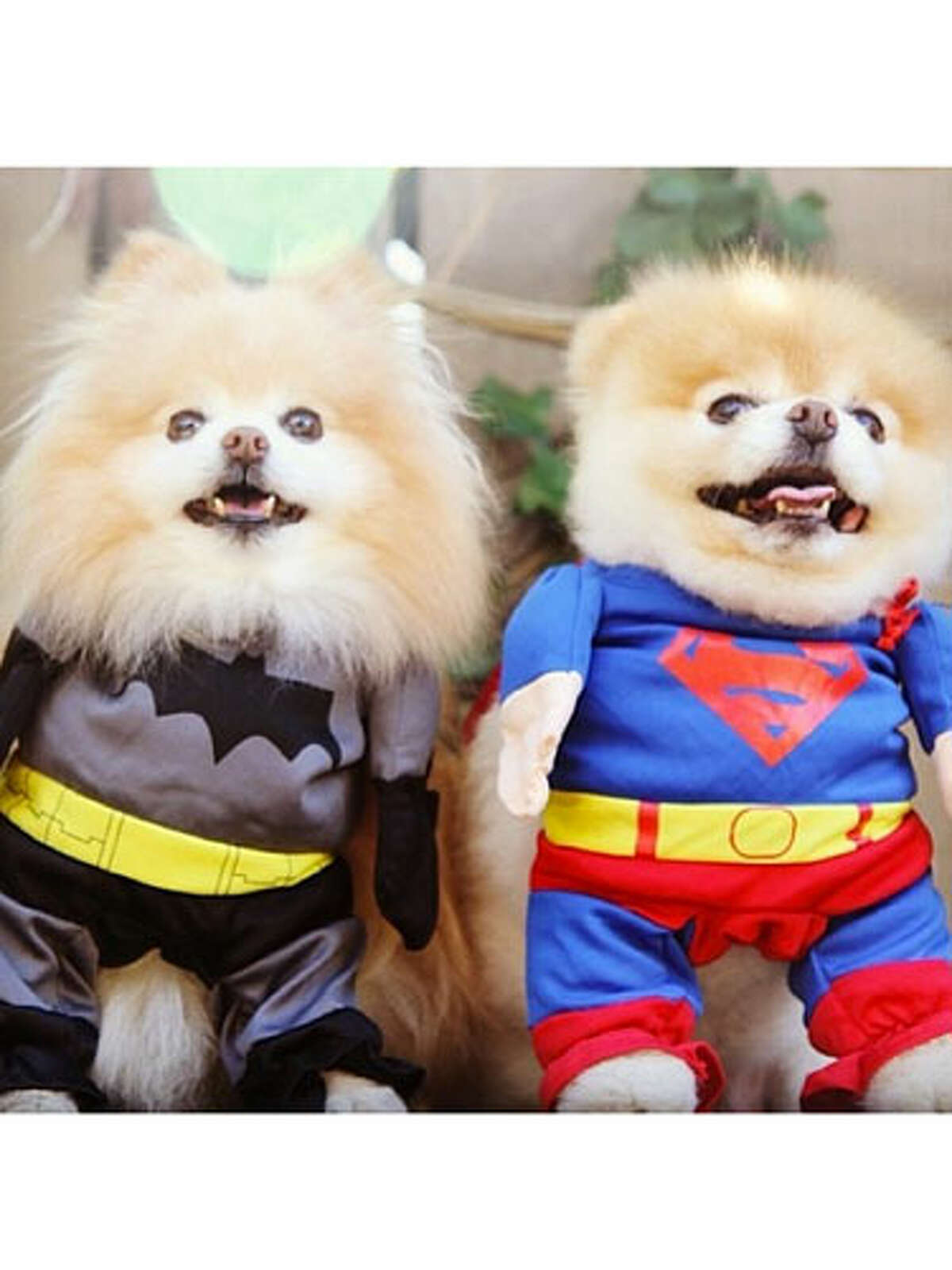 Batman characters are the third most popular pet costumes this Halloween, according to the National Retail Federation.